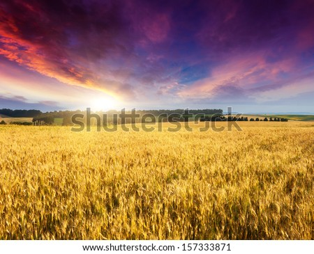 Fantastic wheat field at the sunset. Colorful overcast sky. Ukraine, Europe. Beauty world.