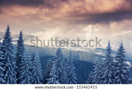 Fantastic winter landscape. Dramatic overcast sky. National Park. Carpathian, Ukraine, Europe. Beauty world. - stock photo