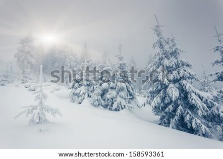 Fantastic winter landscape. National Park. Carpathian, Ukraine, Europe. Beauty world. - stock photo