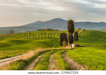 Fantastically wrapped up the road from the old cypress trees on the sides
