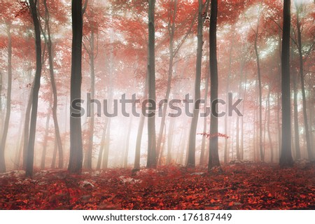 Fantasy autumn red beech forest. - stock photo