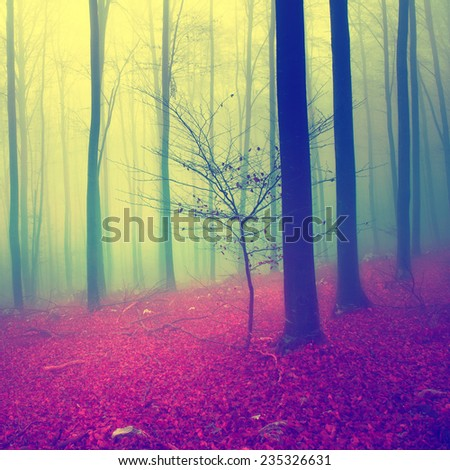 Fantasy blue, green and red autumn season foggy forest. - stock photo