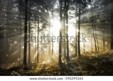 Fantasy firefly lights in the magical sunlight fairy tale foggy forest.