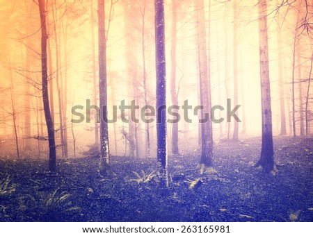 Fantasy foggy forest trees with bright yellow orange sunlight. - stock photo