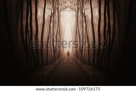 fantasy forest - stock photo