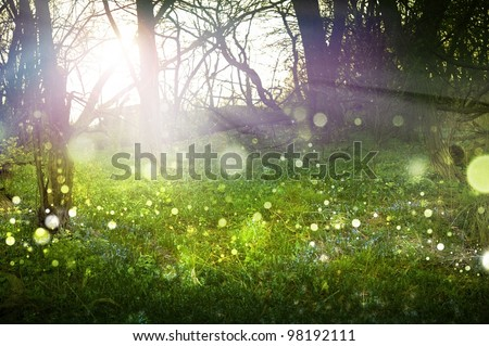 Fantasy Forest Abstract Theme. Sunlight, Sun Rays, FLying Particles, Misty Fog and Forest. Fantasy Forest Theme