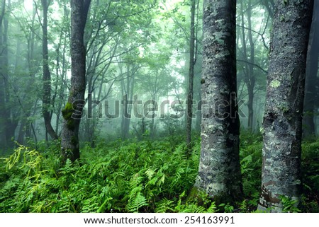 Fantasy forest with dense fog and mysterious atmosphere - stock photo