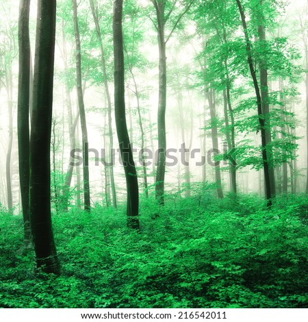 Fantasy green forest trees background.
