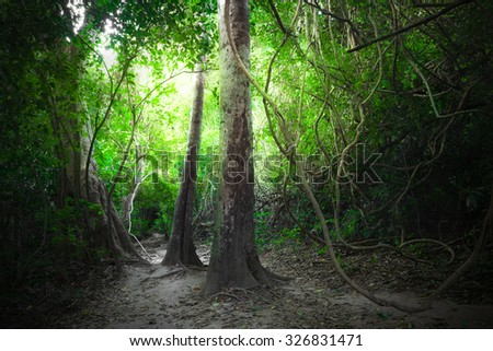 Fantasy jungle deep forest in dark colors with road path way. Sun beams shining  through dense trees. Thailand nature