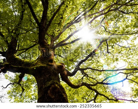Fantasy nature tree.Unusuall tree face and arms.Mystery tree - stock photo