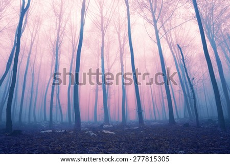 Fantasy pink and blue color foggy fairytale forest scene. Color filter effect used. - stock photo