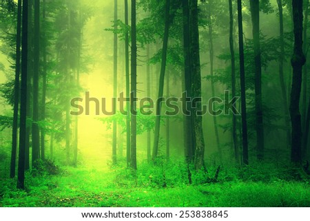 Fantasy yellow green forest with mystic light. Color filter effect used. - stock photo