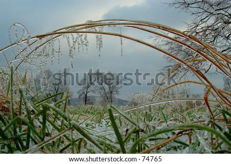 Far Away Trees Through Frozen Grass - stock photo
