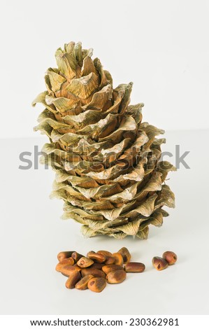 Far East cedar grows on the territories of several countries. The nuts of this tree is delicious and nutritious, are used in the culinary industry, as well as for forcing medicinal oil. - stock photo
