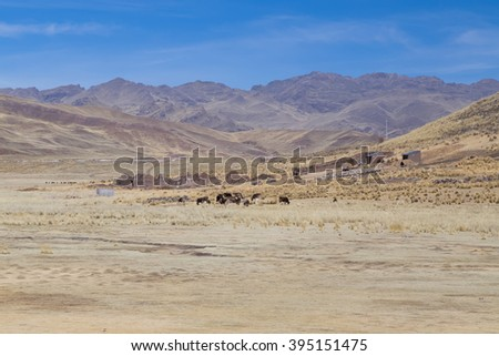 Farm and cows in Andes mountains, Peru - stock photo