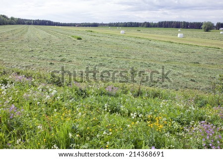 Farm and farmland in the Nordic area. Agriculture surrounded by forests. Plastic wrapped white bales on the ground. - stock photo