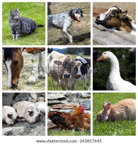 Farm animals collage - stock photo