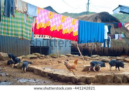 Farm animals in a Cordillera mountains village, Philippines - stock photo