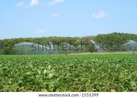 Farm field being watered by an irrigation system - stock photo