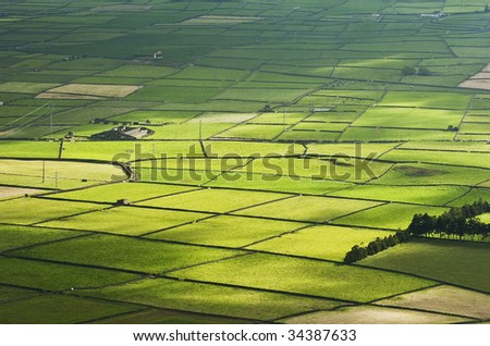 Farm fields in the Terceira island in Azores