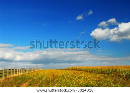 Farm fields on soybeans and corn under blue sky - stock photo