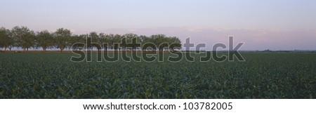 Farm Fields outside of San Antonio, Texas - stock photo