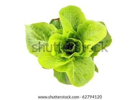 farm fresh green butter lettuce isolated on white - stock photo