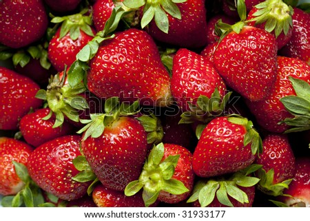 Farm fresh ripe red strawberries with green stems and leaves