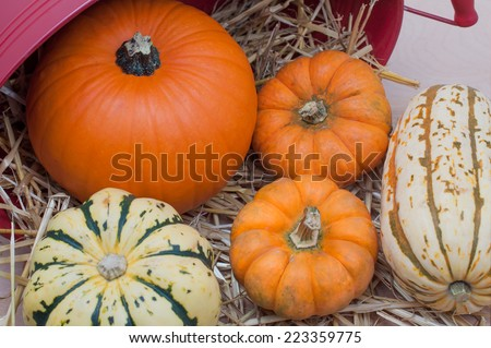Farm fresh squash and pumpkins with straw and basket - stock photo
