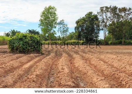 farm ground focus on ground - stock photo
