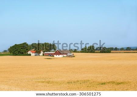 Farm in the cornfield in rural scenery - stock photo