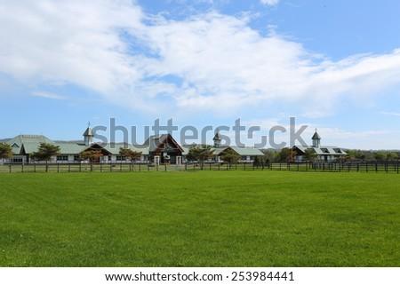 farm of racehorse - stock photo
