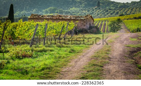 Farm of vineyards in Tuscany