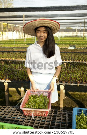 farm owner, Young Asian girl wearing weave hat collecting plant in orchid farm - stock photo