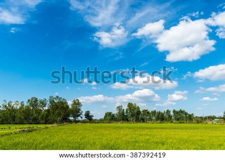 farm rice and clouds sky landscape  - stock photo