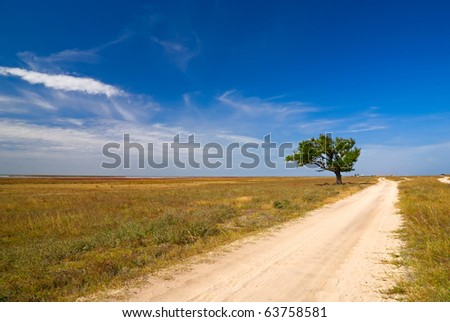 Farm road leading to an old tree - Arabat Spit, Crimea, Ukraine. - stock photo