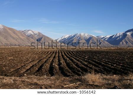 Farm Rows - stock photo
