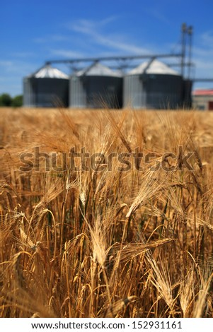 Farm, wheat field with grain silos for agriculture - stock photo