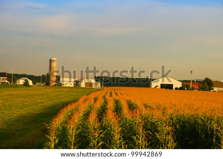 Farm with is field of corn - stock photo