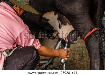Farm worker milking cows at dairy farm. - stock photo