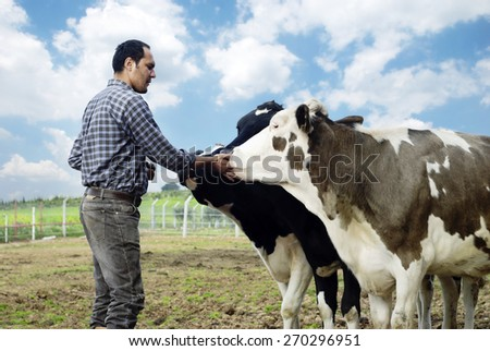 Farmer and cows - stock photo