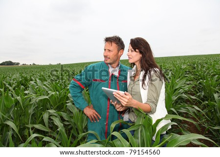 Farmer and researcher analysing corn plant - stock photo