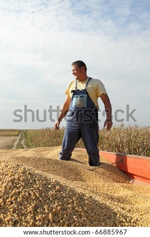 Farmer and soy beans after harvest at tractor trailer