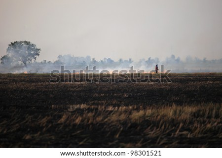 farmer burning his rice field cause of environment polution - stock photo