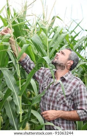 Farmer checking his cornfield - stock photo