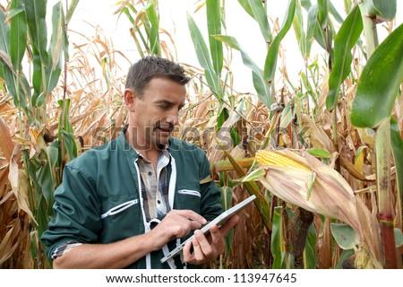 Farmer checking on corn crops - stock photo