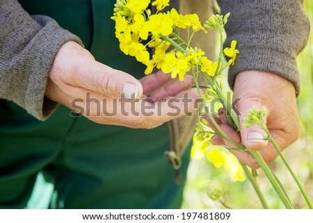 Farmer controls his canola field - stock photo