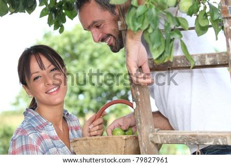 Farmer couple picking fruit - stock photo