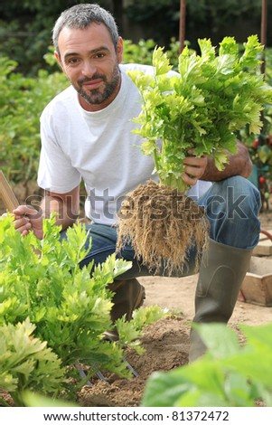 Farmer crouching by lettuce patch - stock photo