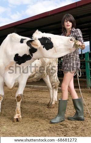 farmer feeding a cow in her farm - stock photo